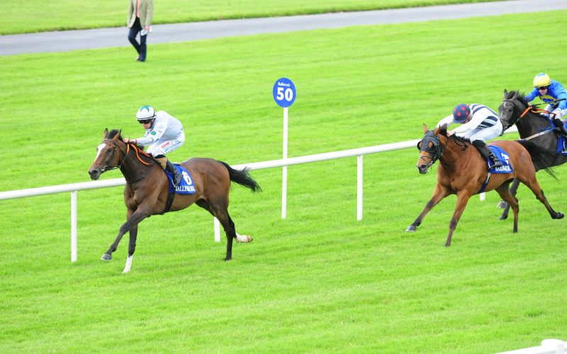 Scotts Honor | Winner at Ballinrobe and sold.