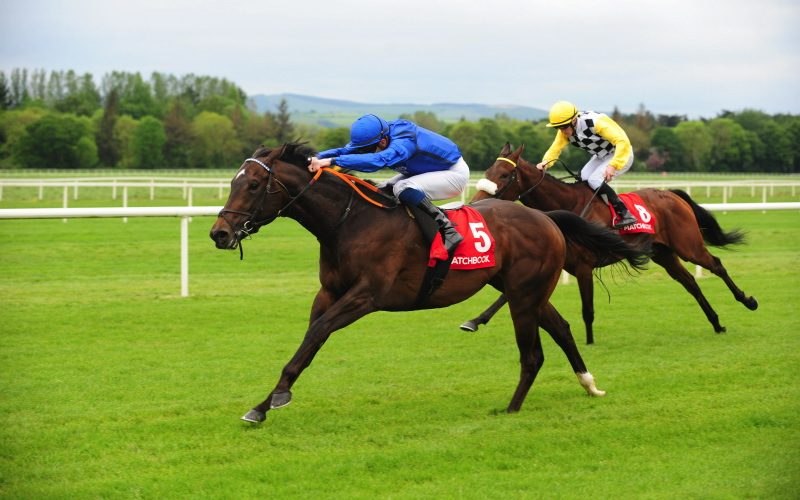 Highland Dress | Winner at Cork and sold to Newmarket HIT Sale.