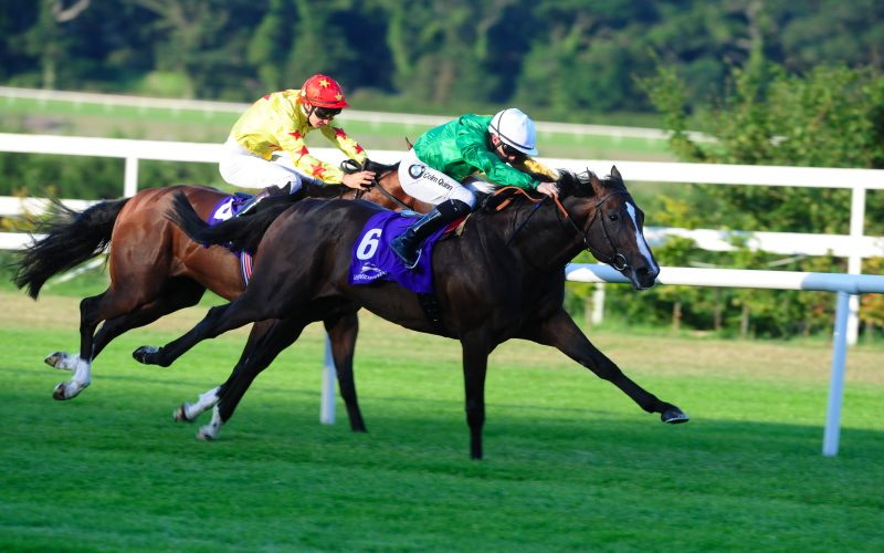 Waikuku | Winner at Leopardstown and sold to Hong Kong, went on to multiple wins in Hong Kong, including The Stewards Cup Gr 1 and The Jockey Club Mile Gr 2.