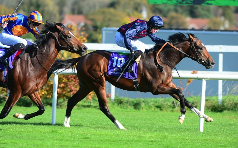 Manjeer | Winner at Leopardstown and sent to France.